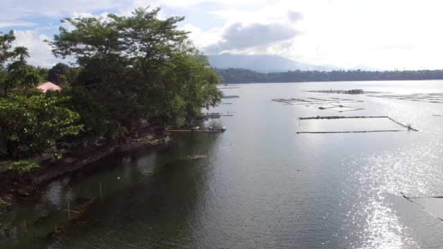 Trees and vegetation on mountain lake shore. Drone aerial. video