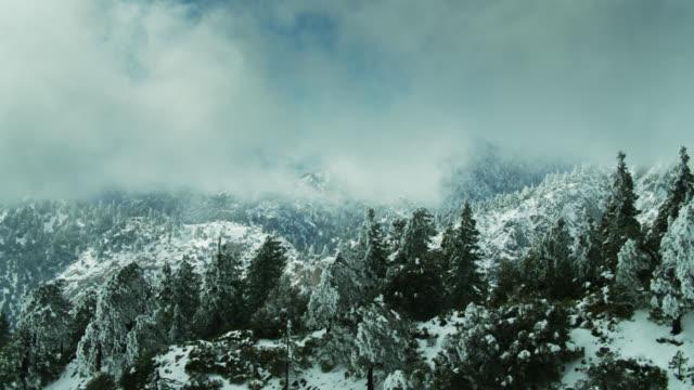 Arbres pliés sous la neige dans les montagnes de San Gabriel - Drone Shot - Vidéo