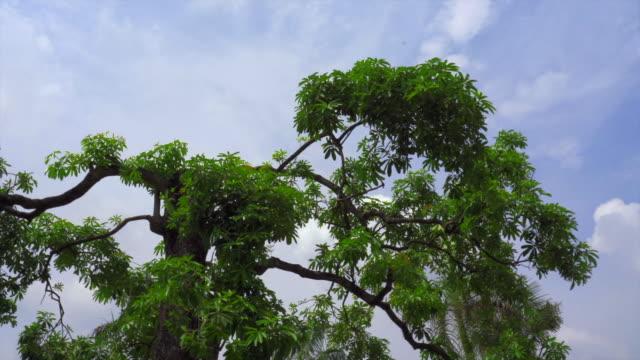 vidéos et rushes de arbres en nuage ciel panoramique - couleur saturée