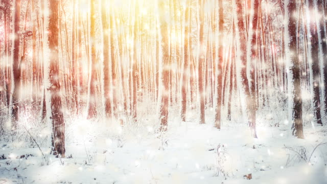 Trees covered with snow on a bright sunny winter day video