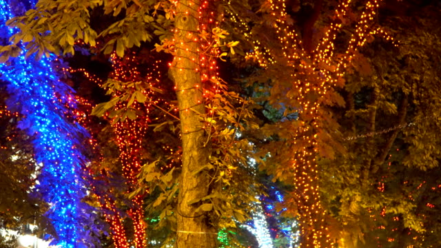 Trees decorated with decorative garlands video