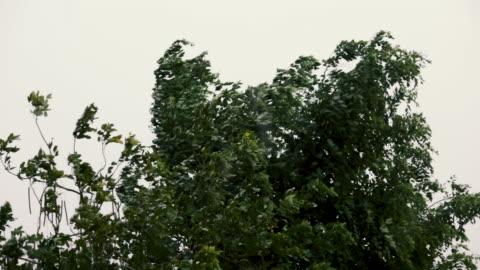 vidéos et rushes de arbres pendant la tempête et la pluie lourde, pluie lourde et vent fort soufflant des arbres - lourd