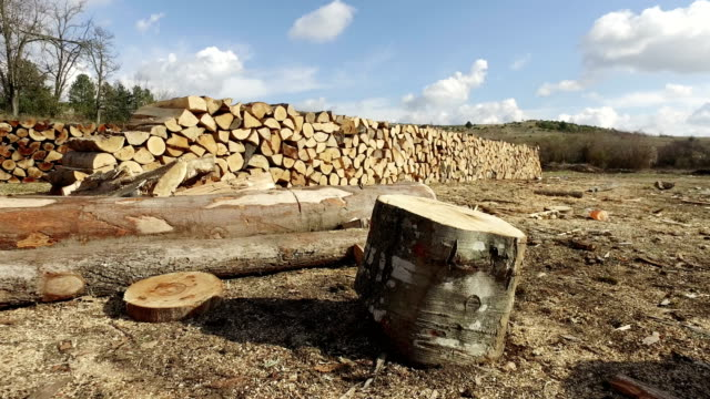 trees felled for transportation and stored for the industry video