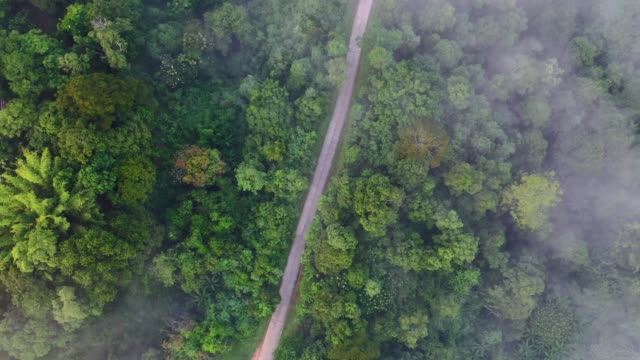Trees forest roads and fog from above