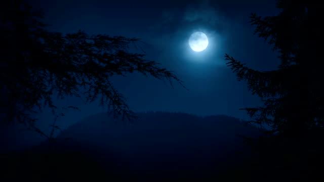 кадрирование ночь лес с деревьями moon - болото стоковые видео и кадры b-roll
