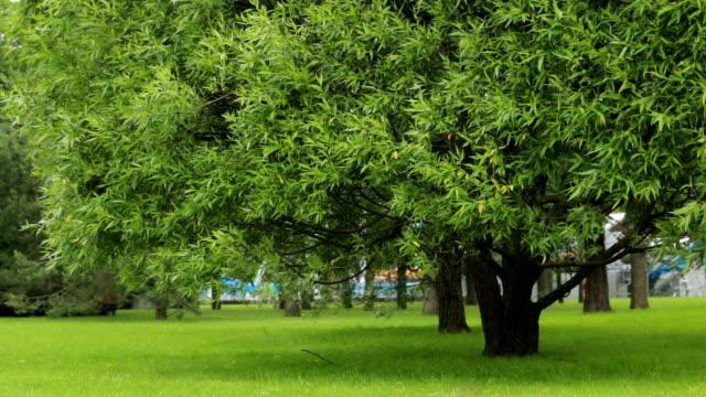 vídeos de stock e filmes b-roll de trees in a city park summer greens grass - parque público