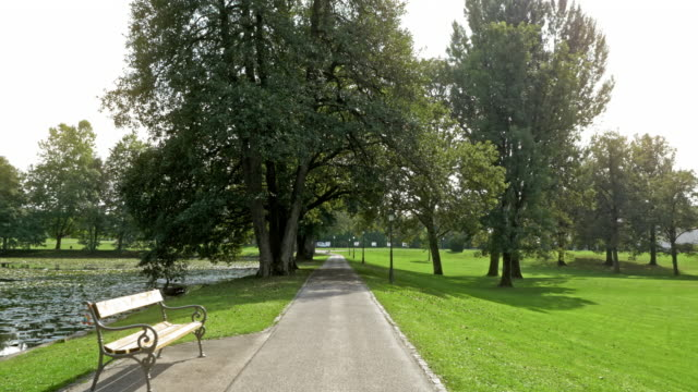 aerial trees in a park by the lake in sunshine - bench stock videos & royalty-free footage