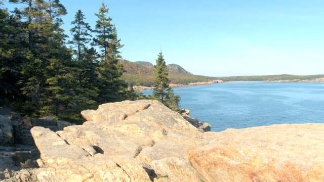CLOSE UP: Trees in fall colors and rugged rocky coast of Acadia National Park video