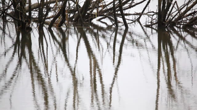 trees in pond reflection water ripples video