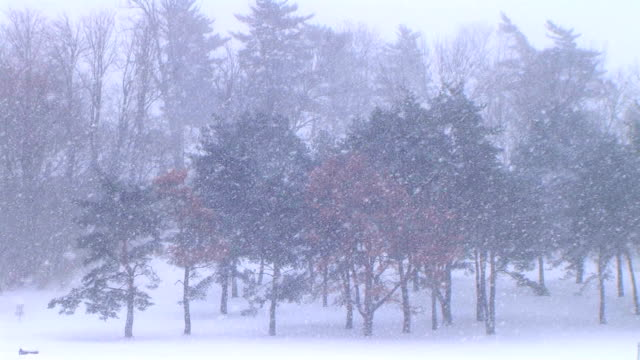 Trees in Snowstorm video