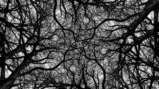 trees in symmetry - loopable - узор калейдоскоп стоковые видео и кадры b-roll