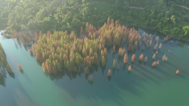 湖の木々 - 夏点の映像素材/bロール