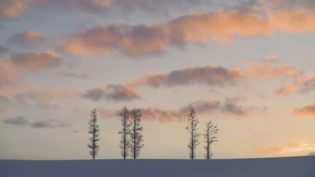 träd i snön vid solnedgången, mild seven hill, biei, hokkaido, japan - hokkaido bildbanksvideor och videomaterial från bakom kulisserna