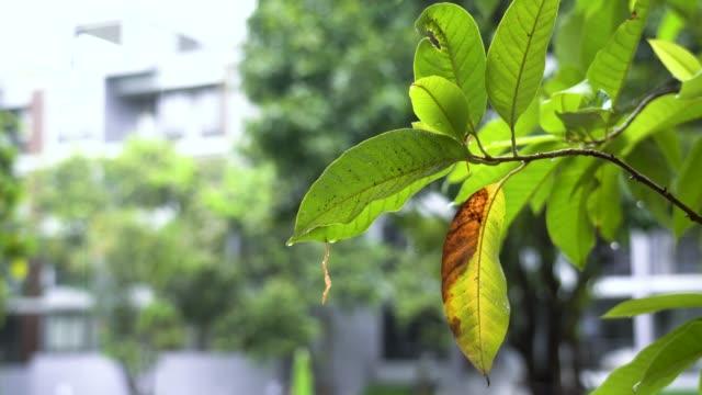 비가 내리는 동안 나무의 잎 - 자연에서 휴식을 취하십시오. - thank you background 스톡 비디오 및 b-롤 화면