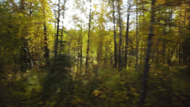 Trees motion transicion video
