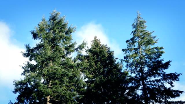 vídeos de stock e filmes b-roll de trees moving around in strong winds - oscilar