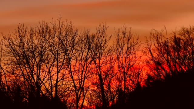 alberi che si muovono nel vento prima del tramonto - albero spoglio video stock e b–roll