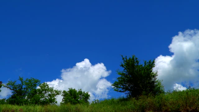 Trees on the edge of the ravine on a background of sky with clouds video
