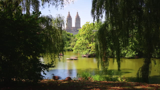 trees shadow central park lake 4k time lapse from new york video