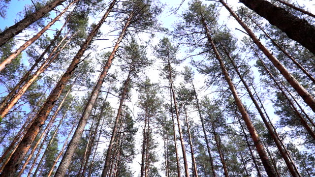 Trees swaying against the sky. video