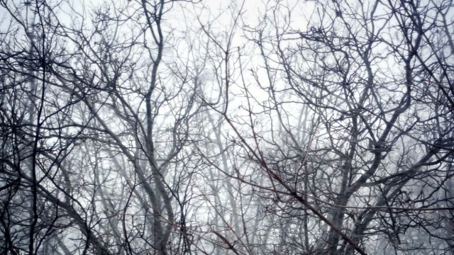 Trees under heavy snow in winter video