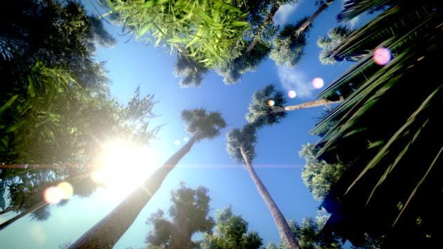 Trees video