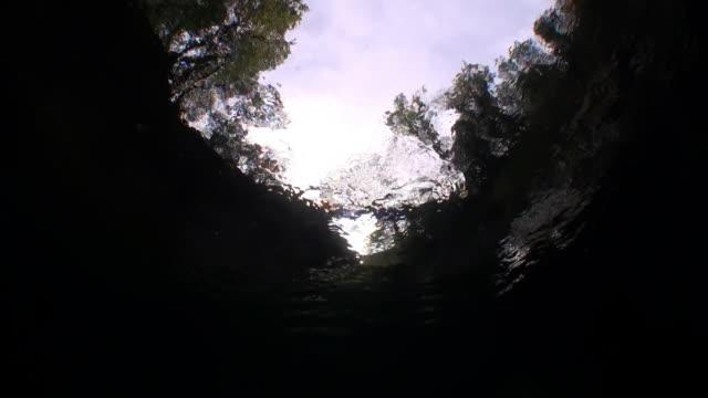Bomen zichtbaar van onder het transparante water van de rivier de Verzasca. video