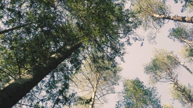 vidéos et rushes de arbres sans feuilles sur le fond du ciel printanier - vue partielle