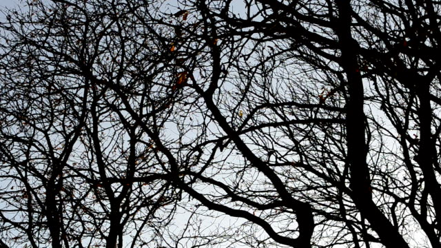 Trees without leaves against the sky. video