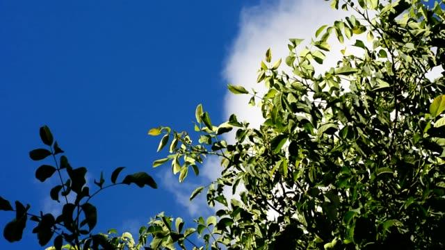 Treetop in wind video