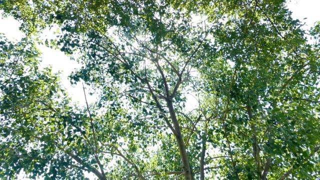 Treetops framing the sunny video