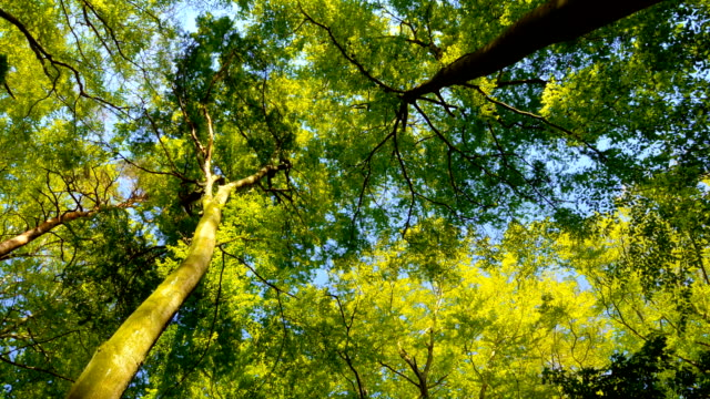 Treetops in a beautiful green forest – film
