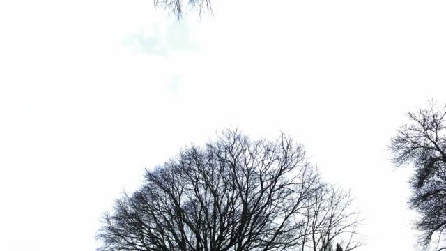 Treetops in Lisbon video
