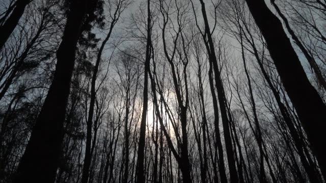 baumkronen in geheimnisvollen wald. dunkle blattlose bäume krönen sich im großen, verzauberten wald. - laub winter stock-videos und b-roll-filmmaterial