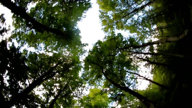 Treetops video