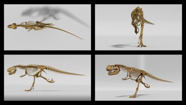 trex skelett kör cykel, 3d-animering loop, alfakanal - tyrannosaurus rex bildbanksvideor och videomaterial från bakom kulisserna