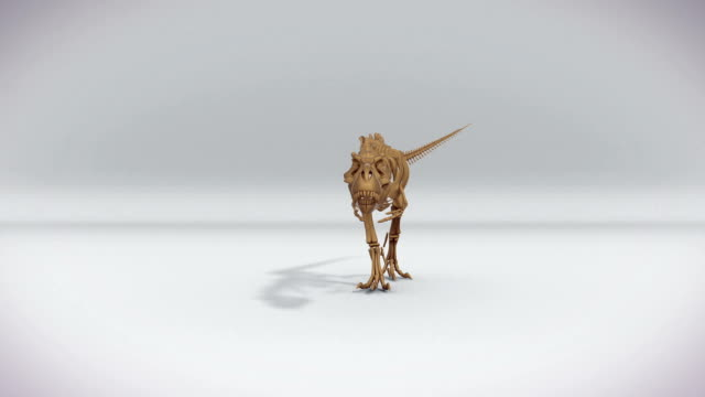 Trex skeleton walking, roaring 3D animation, alpha channel Trex skeleton walking, roaring 3D animation, alpha channel animal skeleton stock videos & royalty-free footage