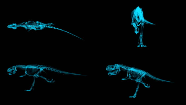 Trex Xray skeleton running cycle, 3D animation slow motion loop, alpha channel Trex Xray skeleton running cycle, 3D animation slow motion loop, alpha channel animal skeleton stock videos & royalty-free footage