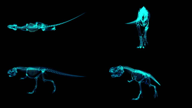 Trex Xray skeleton walking cycle, 3D animation loop, alpha channel Trex Xray skeleton walking cycle, 3D animation loop, alpha channel animal skeleton stock videos & royalty-free footage