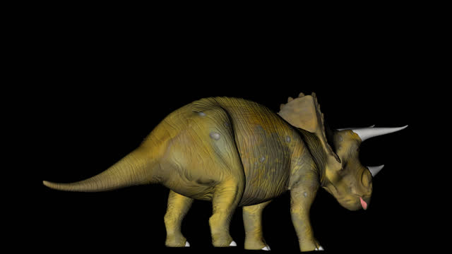 Triceratops Dinosaur in Rotation on Black Background