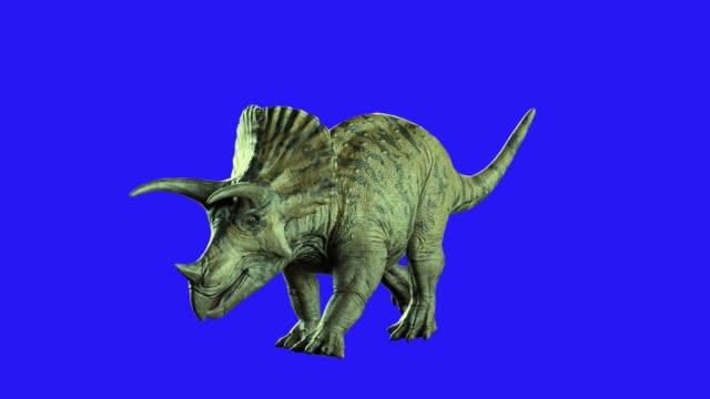 Triceratops dinosaur on blue background 3D render