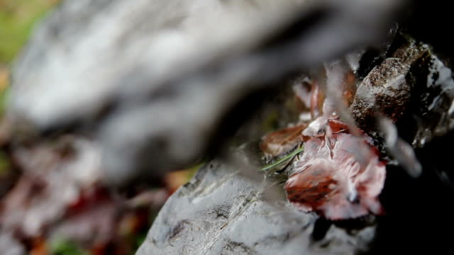 Trickling water in forest video