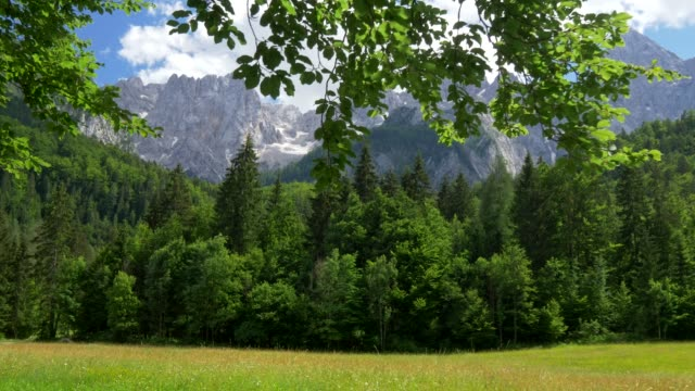 Triglav National Park, Slovenia. Meadow, pine forest and the snowy Mount Triglav of Julian Alps. Blue cloudy sky, bright sunny day. Steadicam shot, 4K