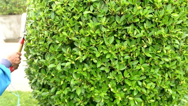 trim the ornamental plants - куст стоковые видео и кадры b-roll