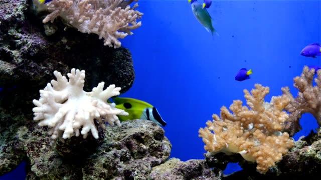 tripical рыб и кораллов в aquarium - морская рыба стоковые видео и кадры b-roll