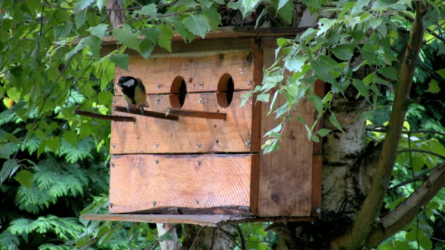 Triple birdhouse with tit video