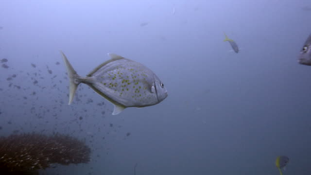 trivially fish video