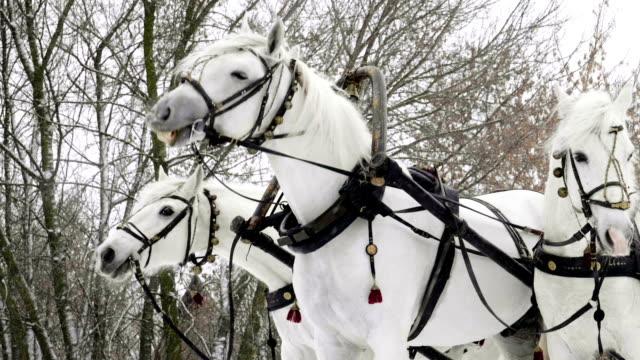vídeos de stock e filmes b-roll de troika. russian carriage drawn by a team of three white horses. slow motion. hd - puxar cabelos