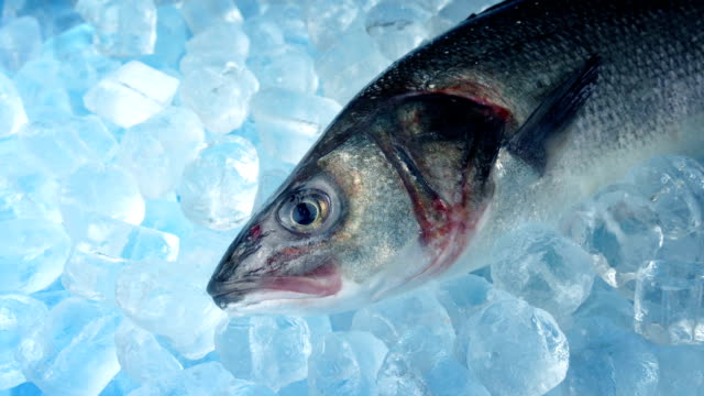 vídeos de stock e filmes b-roll de trophy fish on ice - congelador