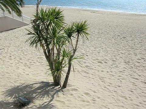 tropic palm - 10 saniyeden daha kısa stok videoları ve detay görüntü çekimi